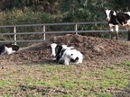 牛窓だけに。近所の牧場で