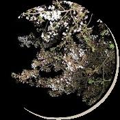 夜のお花見。花より団子?