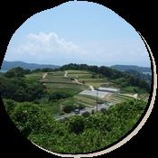牛窓 パッチワークの丘 初夏の風景